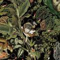 menagerie of extinct animals Moooi Wallcovering Extinct Animals arte