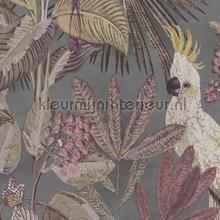 Toucan jungle tapet BN Wallcoverings Panthera 220123