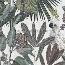 Toucan jungle tapet BN Wallcoverings Panthera 220125