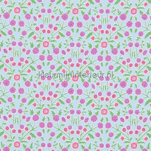 Candytuft cortinas 224636 flores Sanderson