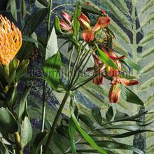 amazonas fotobehang 16900 Passenger Hookedonwalls