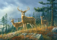 Autumn Whitetails photomural Ideal Decor Ideal-Decor Poster 00151