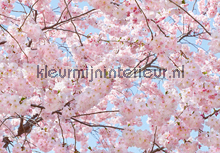 Pink Blossoms fotobehang Ideal Decor Ideal-Decor Poster 00155