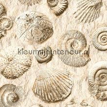 Fossielen tapeten Dutch Wallcoverings Replik J86207