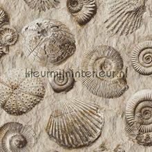 Fossielen tapet Dutch Wallcoverings Replik J86209