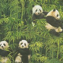 Panda`s en bamboo behang AS Creation meisjes
