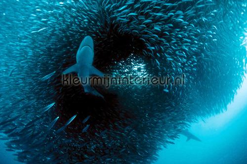 Predator photomural 470-337 XXL Wallpaper 2 AS Creation