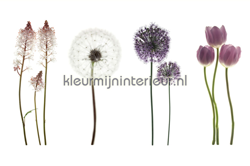 Purple Flowers On White fototapet 470-361 XXL Wallpaper 2 AS Creation