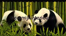 Panda rand papel de parede Dutch Wallcoverings Wallpaper creations
