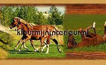 Horses rand behang Dutch Wallcoverings meisjes