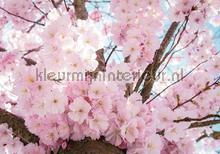 Pink blossom branches fotomurais Kleurmijninterieur Todas-as-imagens