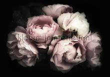 Purple roses on a black background fototapeten Kleurmijninterieur weltkarten