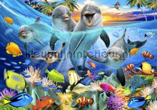 Dolphins smiling fotomurali Kleurmijninterieur sport