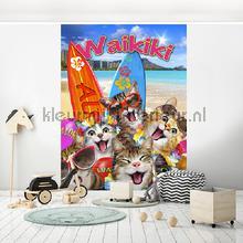 Cats on Waikiki beach fotomurali Kleurmijninterieur sport