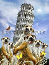 Meerkats at Pisa fototapeten Kleurmijninterieur weltraum