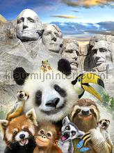 Panda at Mount Rushmore fototapeten Kleurmijninterieur weltraum