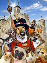 Dogs in England fotomurais Kleurmijninterieur selva