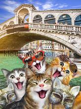 Cats in Florence fotomurali Kleurmijninterieur sport