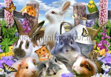 Sweet rabbits fotomurali Kleurmijninterieur sport