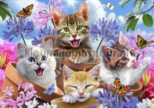 Sweet cats fotomurali Kleurmijninterieur sport