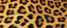 107572 papier murales Kleurmijninterieur tout images