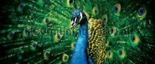 107574 papier murales Kleurmijninterieur tout images