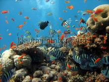 Coral reef fotomurais Kleurmijninterieur selva