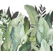 Panoramique tropical forest fototapet Hookedonwalls alle billeder