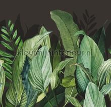 Panoramique tropical forest wallcovering Hookedonwalls wood