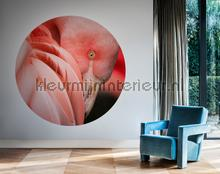BN Wallcoverings Circles fotobehang collectie