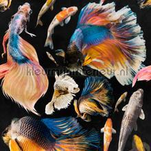 Goldfish anthracite papier murales Mindthegap Collectables 2019 WP20301
