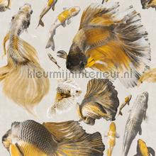 Goldfish ivory papier murales Mindthegap Collectables 2019 WP20302