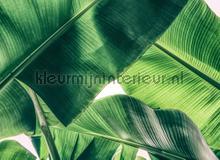 Broken Leaf I fotobehang AS Creation Bloemen Planten