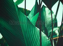 Leaf stalks I fotobehang AS Creation Bloemen Planten