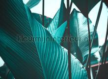 Leaf stalks II fotobehang AS Creation Bloemen Planten
