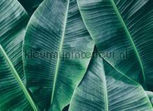 Banana leaves fotobehang AS Creation Bloemen Planten