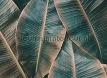 Banana leaves II fotobehang AS Creation Bloemen Planten