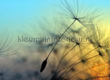 Flying dandelion I fotobehang AS Creation Bloemen Planten