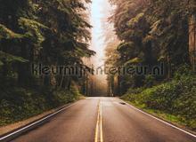 Street through the forest fototapet AS Creation verdenskort