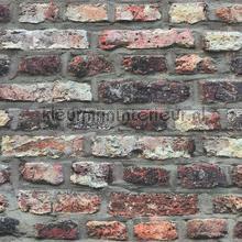 Rustiek gemeleerde muur tapeten AS Creation uni farben