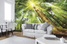 Trees rising high fototapet Kleurmijninterieur verdenskort