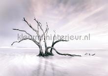 treebrachches fotomurais Kleurmijninterieur Todas-as-imagens