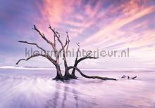 treebrachches in purple fotomurais Kleurmijninterieur Todas-as-imagens