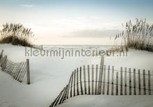 Fence in the dunes fotomurais Kleurmijninterieur Todas-as-imagens