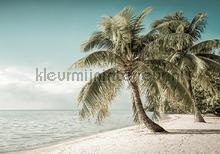 Palms on the beach in soft colors fotomurais Kleurmijninterieur Todas-as-imagens