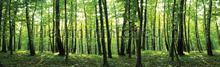Large forest XL fototapet Kleurmijninterieur verdenskort