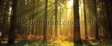 107606 fototapet Kleurmijninterieur verdenskort