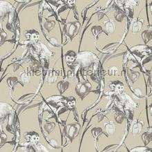 Mad monkeys papier peint AS Creation spécial
