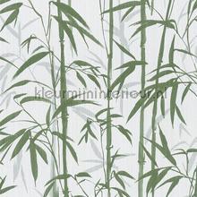 Bold bamboo wallcovering AS Creation wood