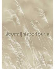 109083 fotomurali Eijffinger PiP studio wallpaper
